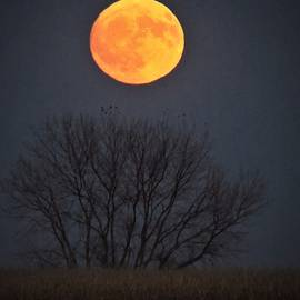 Harvest Moon  by Lori Frisch