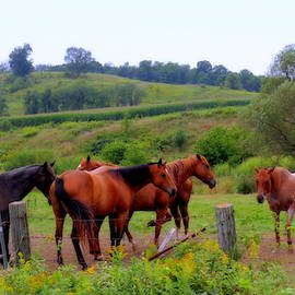 Horses In The Pasture by Kay Novy