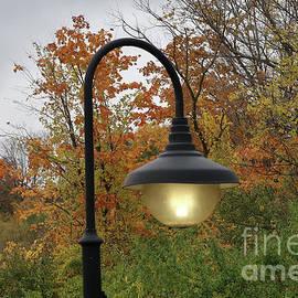 Illumining Autumn by Ann Horn