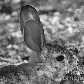 I'm All Ears by Janet Marie