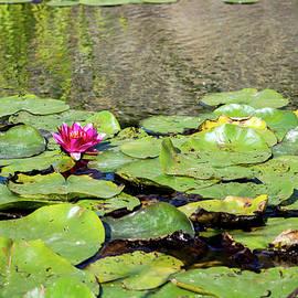Jardin Zen by Smylo