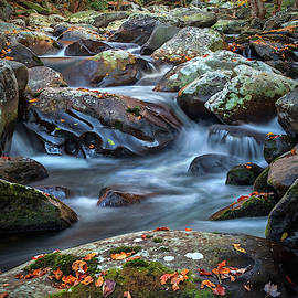 Big Creek, Great Smoky Mountains, Tennessee    by Harriet Feagin Photography