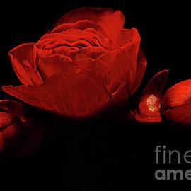 Love For Red Flower # 6. by Alexander Vinogradov