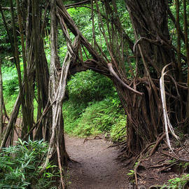 Manoa Falls Trail by Larry Dove
