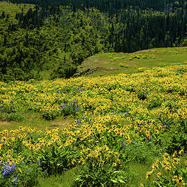 Meadow of Wildflowers by Aashish Vaidya