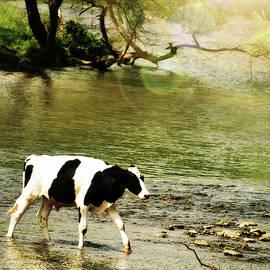 Morning Stroll by Trish Tritz