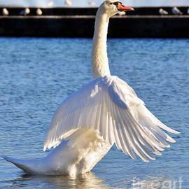 Elaine Manley - Mute Swan
