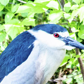 Night Heron by William Rogers