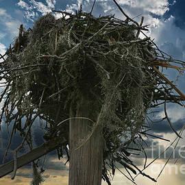 Osprey Nest by Dale Powell