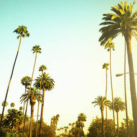 Palm Tree At Sunset On Beverly Hills by Franckreporter