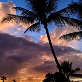 Palms at Sunset by Lori Seaman