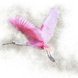 Roseate Spoonbill Flight by Patti Deters