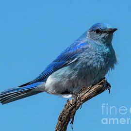 Ruffled Blue by Mike Dawson