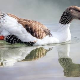 Saddleback Pomeranian Goose by Donna Kennedy