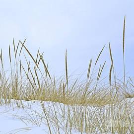 Seasonal Overlap by Ann Horn