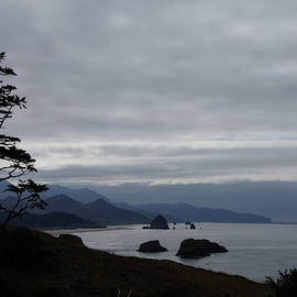 Silhouette of conifer against  seacoast  by Steve Estvanik