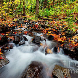 Starvation Creek Autumn Rush by Mike Dawson