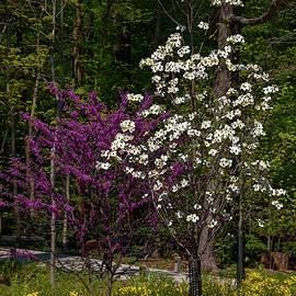 Spring Garden Scene by Sally Weigand