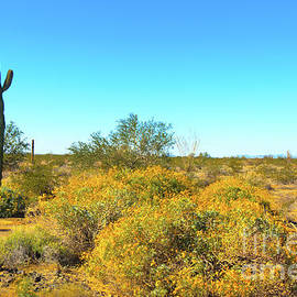 Spring Time In The Sonoran Desert by Robert Bales