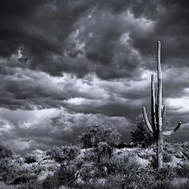 Stormy Desert Skies In Black And White  by Saija Lehtonen
