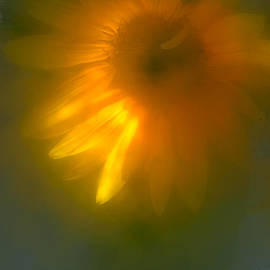 Sunflower # 15. by Alexander Vinogradov