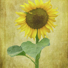 Sunflower by Lynn Bolt