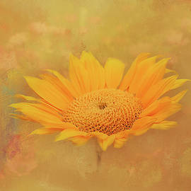 Sunflower on Texture 2 by Terry Davis
