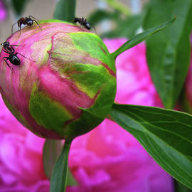 Sweet Buds by Tatiana Travelways