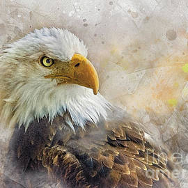 The Eagle's Stare by Brian Tarr