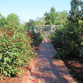 The Garden Path by David Zimmerman