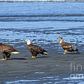 Three Is A Crowd by Robert Bales