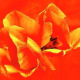 Tulip Fever # 7. by Alexander Vinogradov