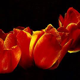 Tulip Fever # 8. by Alexander Vinogradov