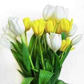 Tulips by Susan Warren