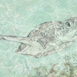 Turtle by Marshal James