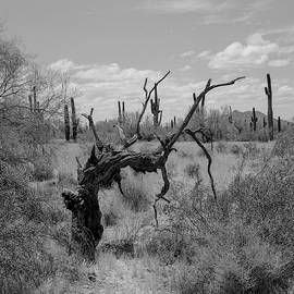 Twisted Tree by HW Kateley