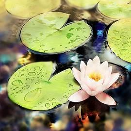 Water Lily #8 by Slawek Aniol