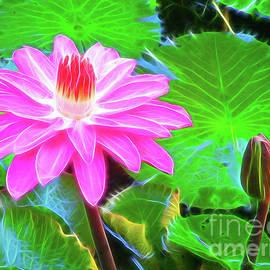 Water Lily by Jerome Stumphauzer