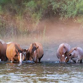 Wild On The River  by Saija Lehtonen