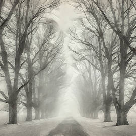 Winter Trees by Terry Davis