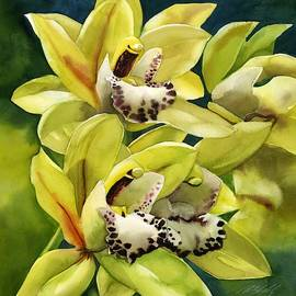 Yellow Cymbidium Orchid by Alfred Ng