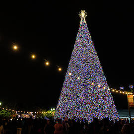 100 Foot Christmas Tree Delray Beach Florida by Lawrence S Richardson Jr