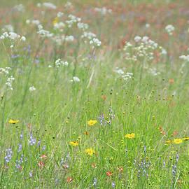11074 Texas Wildflowers by Pamela Williams