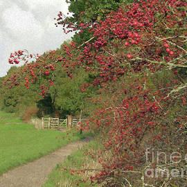 Autumn Path by Kim Tran