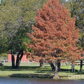 Ruth Housley - Autumn Tree