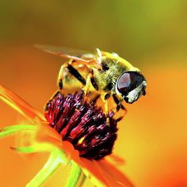 Bee macro by Alex Nikitsin