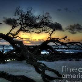 Driftwood Beach Sunrise by Charlene Cox