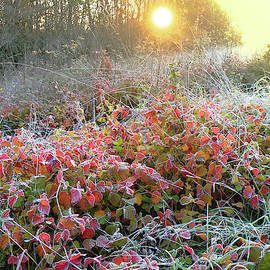 Alex Lim - Morning Frost