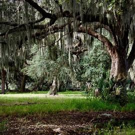 Shady Oak Trail by Carol Bradley