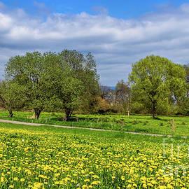 Spring on Lake Constance by Bernd Laeschke